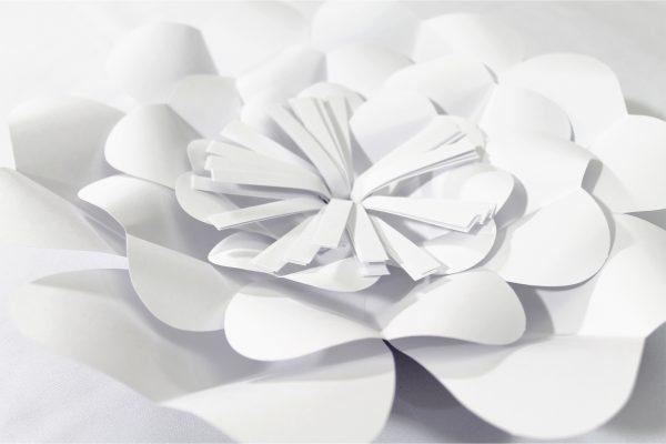 blanco3